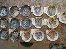 Cats Collectible plates in Rolla, Missouri